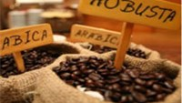 Vietnam coffee sales climb as prices gain, drought may ease