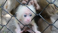 Vietnam wildlife center rehabilitating abused animals