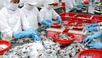 Workers process shrimp for export at a Vietnamese seafood company