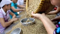 Coffee harvest in Vietnam heads for second highest on rains