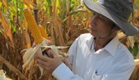 Vietnam's food safety and sovereignty in jeopardy