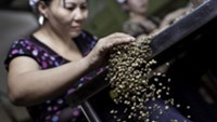 Robusta coffee falls as Vietnam sales increase; cocoa retreats