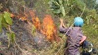 A fire that broke out in a protected forest area in Da Nang on Saturday evening was still raging 24 hours later.