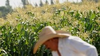 """US """"bullying' developing nations to accept genetically modified organisms"""