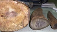 This picture shows three parts of a horn, most likely from rhinos, confiscated by police from a bus driver in the northern province of Quang Ninh on Wednesday