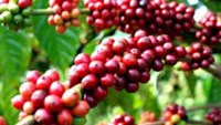 Vietnam set to review tax refund rules to boost coffee exports