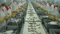 Vietnam exported US$1.2 billion worth of shrimp in the first eight months