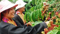 Vietnam coffee premium seen by Volcafe rising 23 pct on thin trade