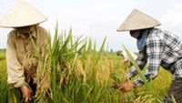 Vietnam major exporter of farm produce, but cannot influence prices