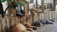 Where dogs and cats are chicken soup for the soul