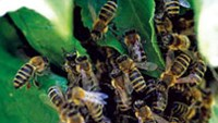 S.Korean tourist killed by bee stings in Vietnam forest