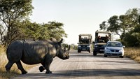 A rhinoceros crosses a road inside Kruger National Park in South Africa. South Africa's government has taken steps to protect rhinos, including deploying soldiers in Kruger.