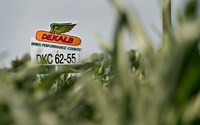 A sign for DeKalb seed corn, a brand of Monsanto Co., stands near a corn field in Princeton, Illinois, US.  Vietnam has approved the importation of two genetically-modified (GM) corn varieties produced by Monsanto. Photo credit: Bloomberg