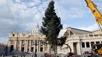 Workers erect a Christmas tree in St. Peter's Square at the Vatican December 4, 2014. Photo credit: Reuters