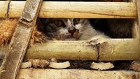 Thousands of seized cats feared buried alive in Vietnam