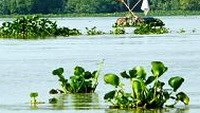 Child survives 10km river ordeal by holding hyacinth