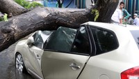 Uprooted tree crushes 4 cars in Vietnam metro