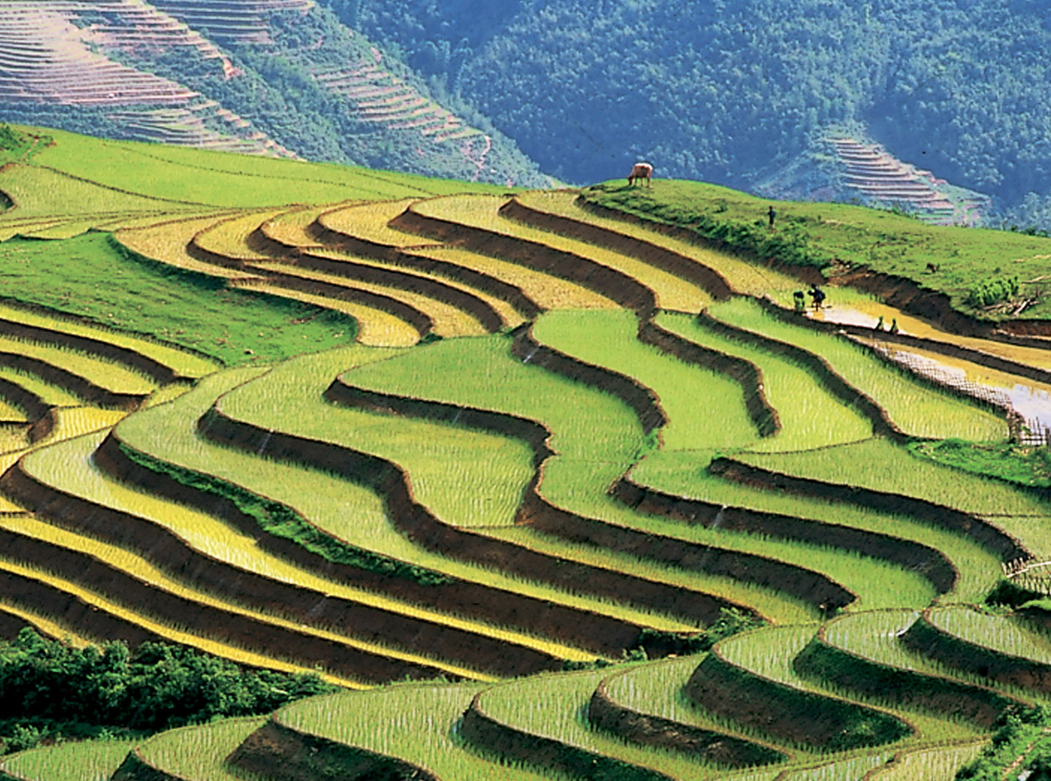 Vietnam Listed In Rough Guides Top 20 Most Beautiful