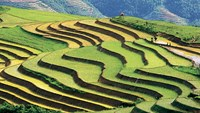 Terraced fields in mountainous town of Sapa, Lao Cai Province