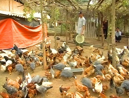 Vietnam detects first H5N6 bird flu in poultries