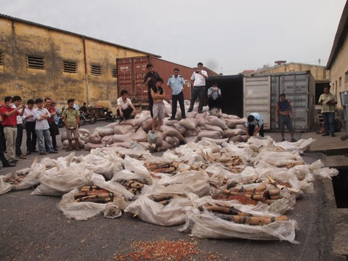A ton of ivory was seized by local police in the northern city of Hai Phong on Tuesday. Photo: HH