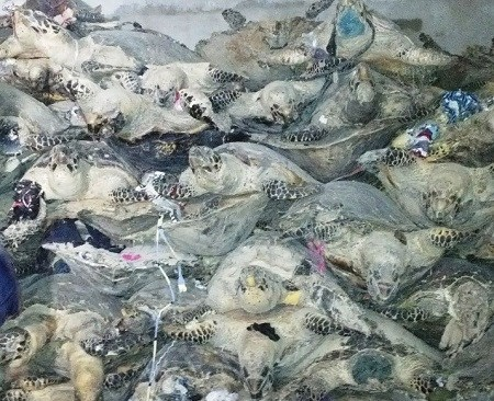 More than a thousand sea turtle corpses were found at two warehouses in Nha Trang on Wednesday afternoon. Photo provided by police.
