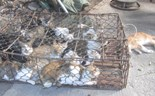 Vietnam police bust cat theft gang