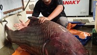 A 135-kilogram giant barb was transported and sold in Ho Chi Minh City on Thursday. Photos: CTV