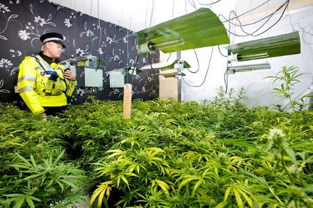 A file photo provided by UK police shows a policeman searching at an illegal cannabis farm in the country.