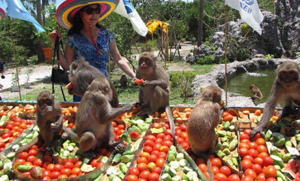 Monkeys to have their day on Vietnam island this Sunday