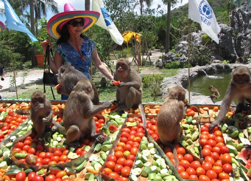 A file photo shows the monkey party in Hon Lao, Khanh Hoa province, in 2013.