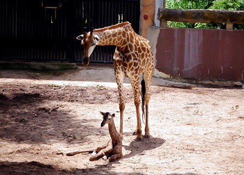 The newborn with his mother on Thursday. Photo credit: VnExpress.