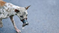 A photo of a dog tightly muzzled with duct tip in the southern province of Ben Tre. Photos: Dien Nguyen