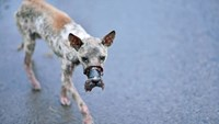 A photo of a dog tightly muzzled with duct tape in the southern province of Ben Tre.