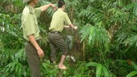 Conservationists releasing four monkeys into the Pu Mat National Park. Photo credit: Nguoi Lao Dong