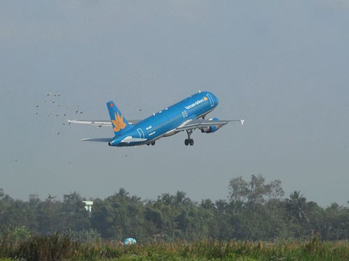 Vietnamese authorities are stepping up measures to prevent birds from colliding with planes at nationwide airports. Photo: Dinh Quan