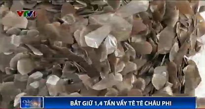 A still in VTV's clip of 1.4 tons of pangolin scales seized at Hai Phong Port on July 23.