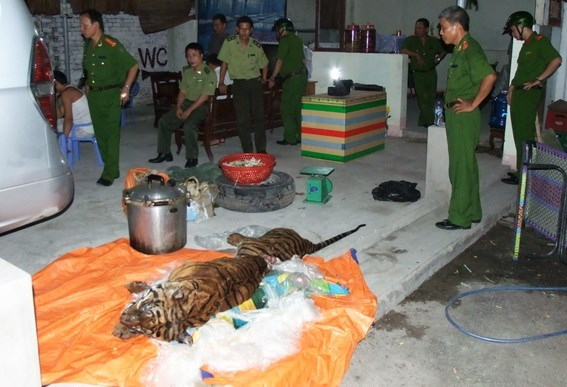 The frozen tiger found in Dong Nai Province. Photo credit: Dong Nai Online