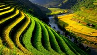 A terraced rice field in the northern Vietnam's resort town, Sa Pa.