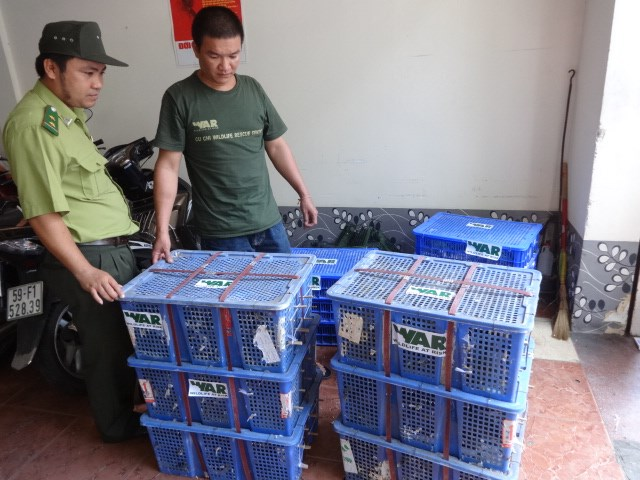 Smuggled birds seized at Ho Chi Minh City's Tan Son Nhat Airport. Photo: Hoang Viet
