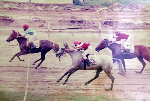 Horses racing on Ho Chi Minh City's Phu Tho track before it was closed in 2011. File photo