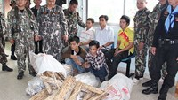 Five Vietnamese men arrested for allegedly poaching rare wood in Thailand. Photo credit: Bangkok Post