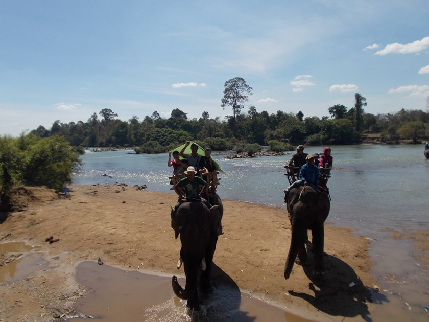Elephants carrying tourists crossing the Serepok River in Dak Lak Province. Photo: Minh Hung