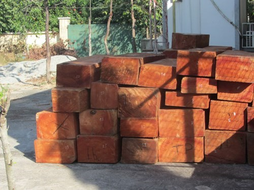 Logs seized by Binh Thuan police on January 12. Photo: Nghi An