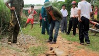 A stray dog was killed in Thai Nguyen Province over rabies suspicions. Photo: Khanh An