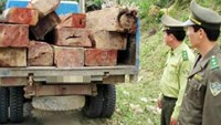 Poached timber seized by park rangers in Lam Dong Province. File photo