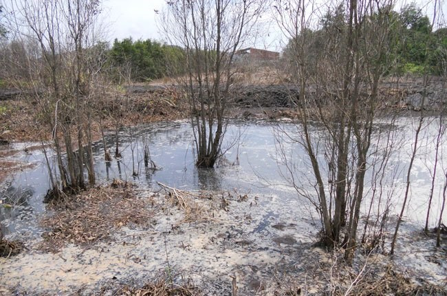 Trees die due to water pollution near a garbage site in Ho Chi Minh City's Cu Chi District. Photo credit: Saigon Times Online