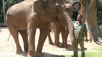Saigon zoo denies rumor that animals are booted out for property project