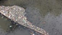 Pollution forces thousands of fish to surface for air on Saigon canal