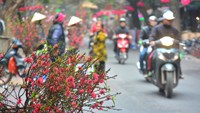 Peach blossoms are sold during the Tet Lunar New Year earlier this year on a Hanoi street. Photo: Truong Giang